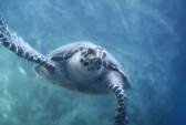 Odyssey of the Sea Turtle @ Museum of Coastal Carolina | Ocean Isle Beach | North Carolina | United States