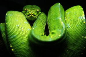 Python1.img_assist_custom-600x401