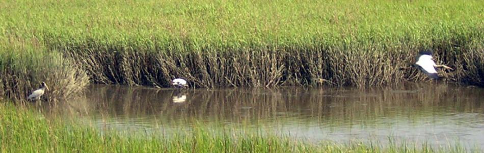 Marsh Slider