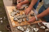 Museum is Open During Oyster Fest @ Museum of Coastal Carolina