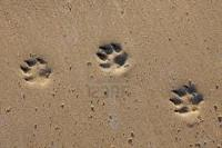 Tracks in the Sand @ Museum of Coastal Carolina