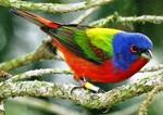 Birds of Southeastern NC @ Museum of Coastal Carolina | Ocean Isle Beach | North Carolina | United States