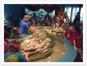 Super Saturday Touch Tank Feeding @ Museum of Coastal Carolina | Ocean Isle Beach | North Carolina | United States