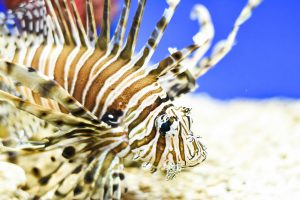 Lionfish & Invasive Species @ Museum of Coastal Carolina