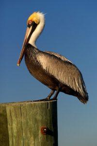 Bird Talk and Walk @ Museum of Coastal Carolina   Ocean Isle Beach   North Carolina   United States