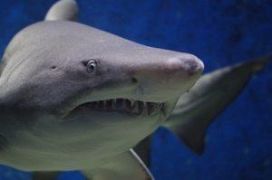 Shark Hunt @ Museum of Coastal Carolina