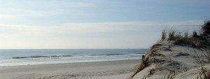 Barrier Island Walk @ Museum of Coastal Carolina