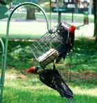 CANCELED -- Bird Walk @ Museum of Coastal Carolina
