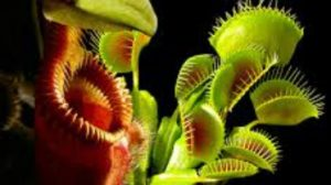Carnivorous Plants @ Museum of Coastal Carolina