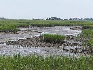 Marsh Walk @ Museum of Coastal Carolina