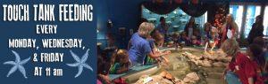 Touch Tank Feeding @ Museum of Coastal Carolina