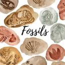 Fossil Identification Day @ Museum of Coastal Carolina