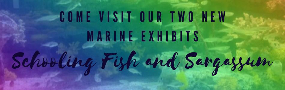 Marine Exhibits